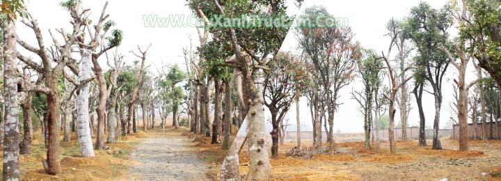 Vườn cây xanh bóng mát của Trúc Lâm
