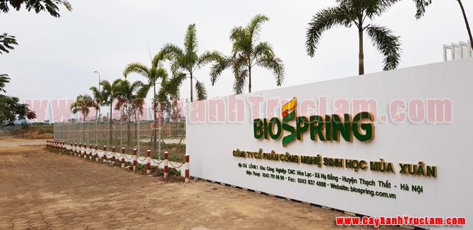 Dự án trồng cây xanh tại BioSpring Khu Công nghệ Cao Hòa Lạc