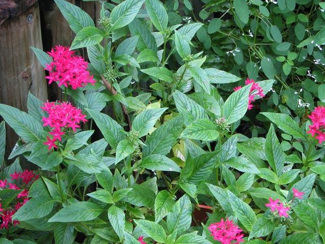 Màu tím hoa cúc diễm châu