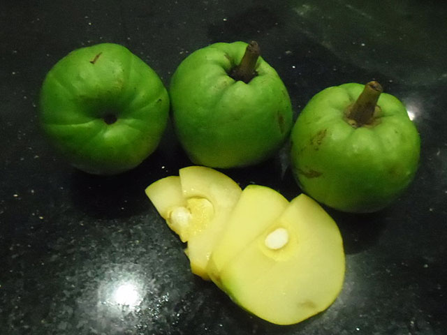 Quả-Cây Tai Chua