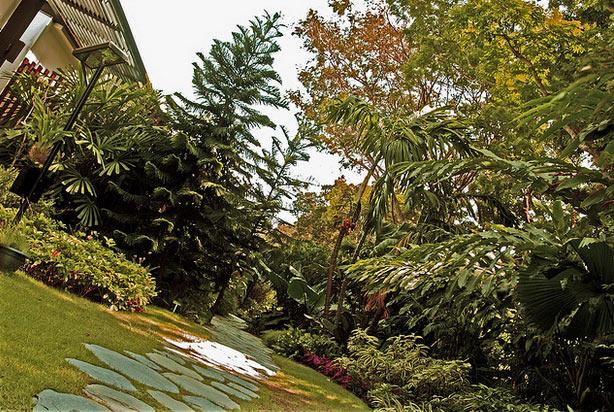 Tùng bách tan được trang tri làm cây ngoại thất sân vườn nhà ở biệt thự....