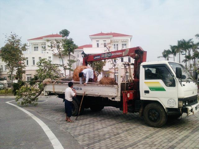 Xe chở cây xanh tại khu đô thị Splendora