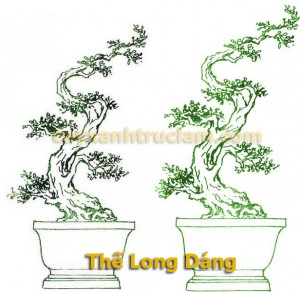 Thế long giáng - cây xanh, trồng cây xanh, cây bóng mát, cây cảnh - LH 0988 857 499 - web: cayxanhtruclam.com