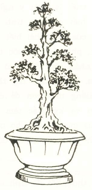Thế trực quân tử: cây xanh, trồng cây xanh, cây bóng mát, cây cảnh - LH 0988 857 499 - web: cayxanhtruclam.com
