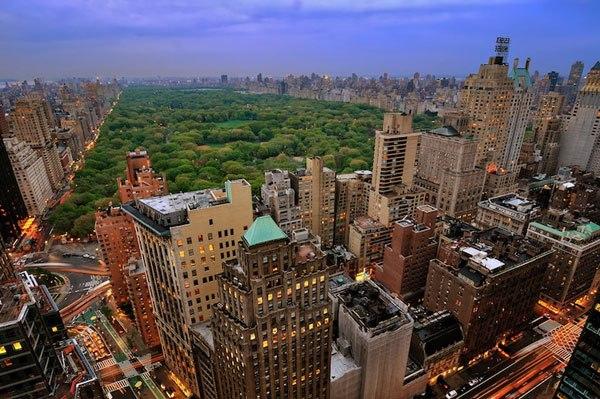 New York, My cay xanh, trong cay xanh, cay bong mat