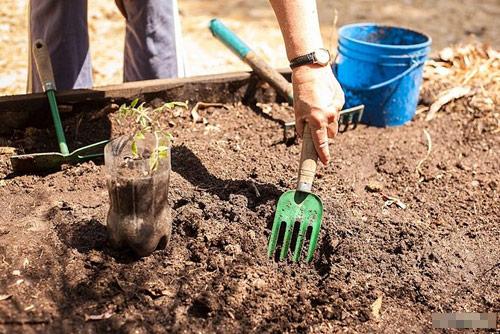 Phương pháp làm đất trồng cây trong chậu