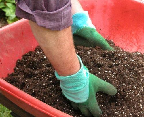 kỹ thuật làm đất trồng cây xanh trong chậu