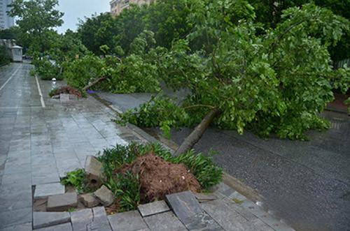 Cơn bão số 3 Dianmu gây gãy đổ cây xanh