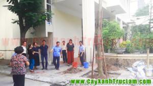 Cung cấp và trồng cây xanh tại Trung tâm Hợp tác Khoa học Kỹ thuật Việt Đức, Trường Đại học Bách Khoa Hà Nội.