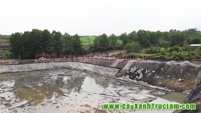 Ao cá trang trại sẽ được trồng cây dừa xiêm
