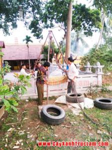 Trồng cây xanh cho nhà chùa Trần Quốc, Chùa Đại Bi, Chùa Linh Quang