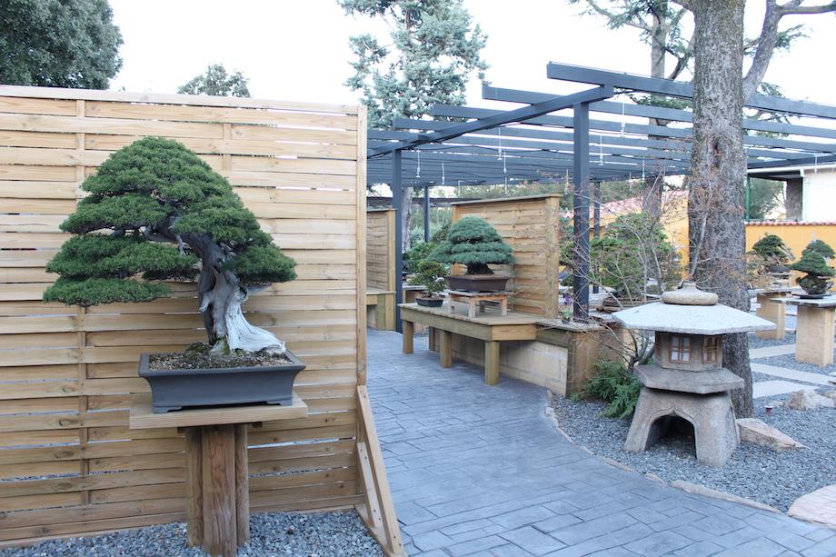 cây cảnh bonsai triệu đô - những cây xanh cây cảnh tiền tỷ