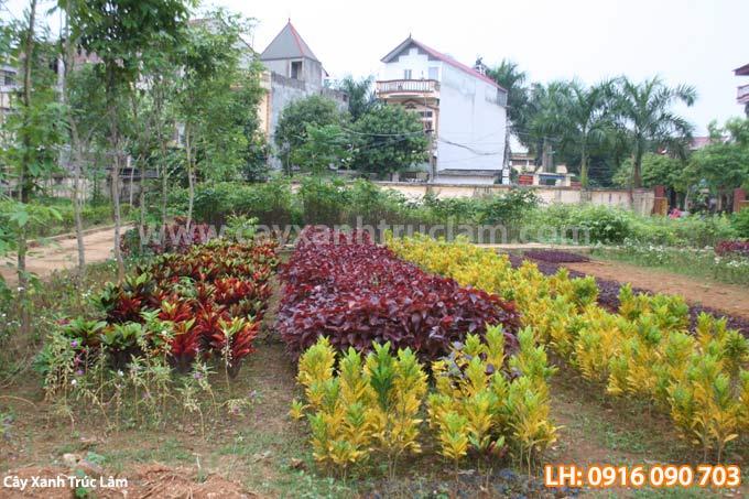 Vườn ươm cây con giống