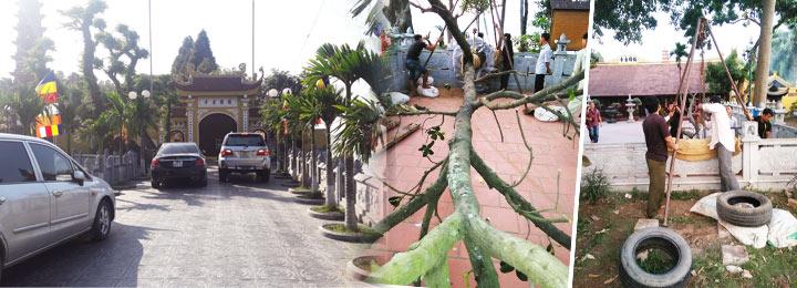 Trồng Cây Xanh Tại Chùa Trần Quốc, Chùa Linh Quang, Chùa Đại Bi Hà Nội