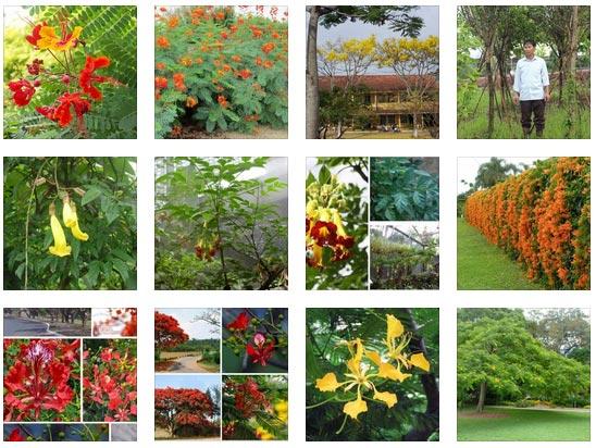 Hãy tạo cho bạn một khu vườn ngày hôm nay để bắt đầu tận hưởng những lợi ích của nó.