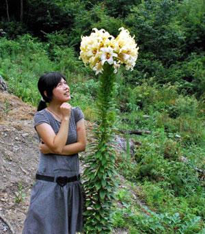 Du khách tạo dáng bên cây hoa ly cao 2m