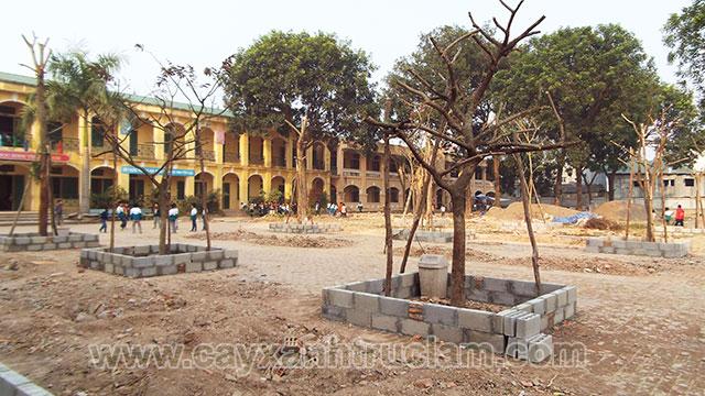 Hình ảnh cắt cành di rời và trồng cây xanh tại sân trường tiểu học Dị Nâu