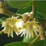 Hoa - Cây Viết