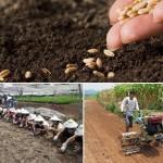 Làm đất và tạo luống gieo hạt trong vườn ươm như thế nào
