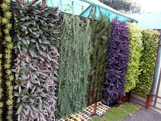 Vườn tường thẳng đứng