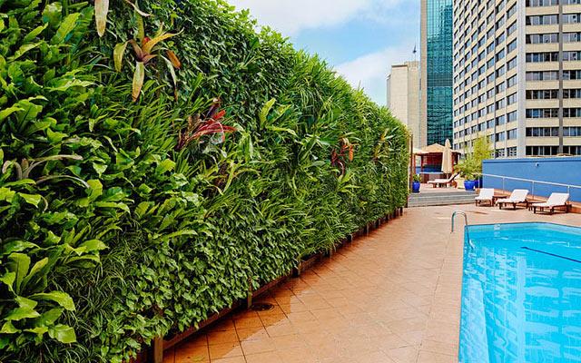 Vườn tường thẳng đứng được thiết kế trồng tại bể bơi