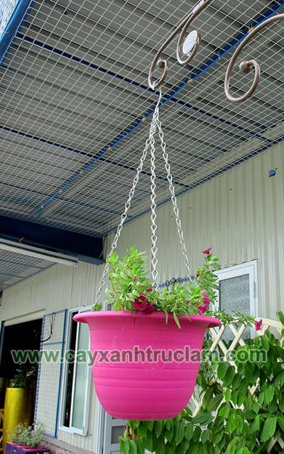 Chậu hoa đã được thiết kế trồng hoa và treo làm thử nghiệm