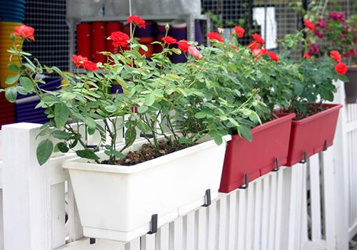 Chậu nhựa trồng hoa hình chữ nhật
