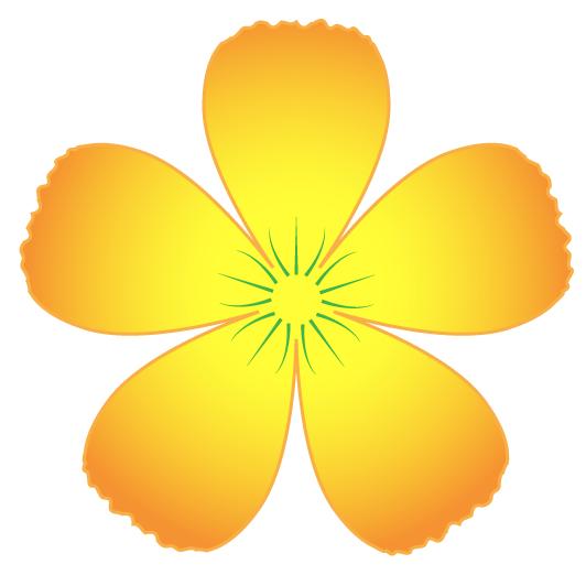 Năm cánh Hoa Mai nở hoa lúc đông xuân giao mùa