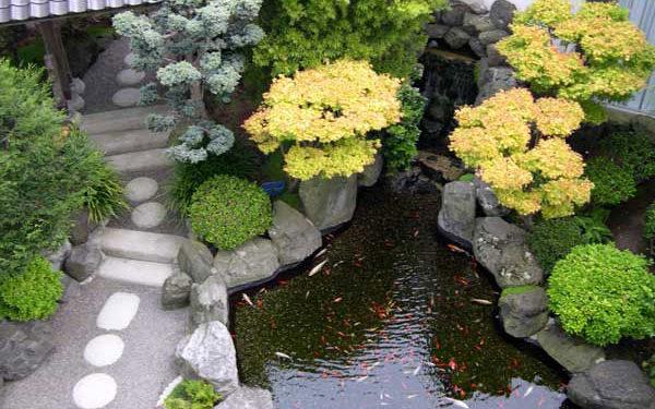 Việc trồng cây xanh theo phong thuỷ nhà ở rất được mọi người quan tâm.