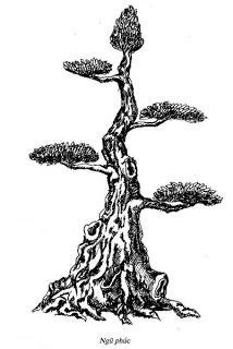 Thế ngũ phúc - cây xanh, trồng cây xanh, cây bóng mát, cây cảnh - LH 0988 857 499 - web: cayxanhtruclam.com