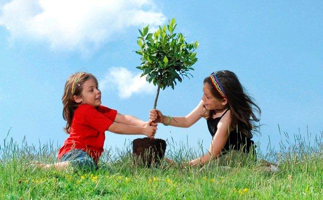 trồng cây xanh, cây xanh, cây bóng mát, dịch vụ trồng cây xanh