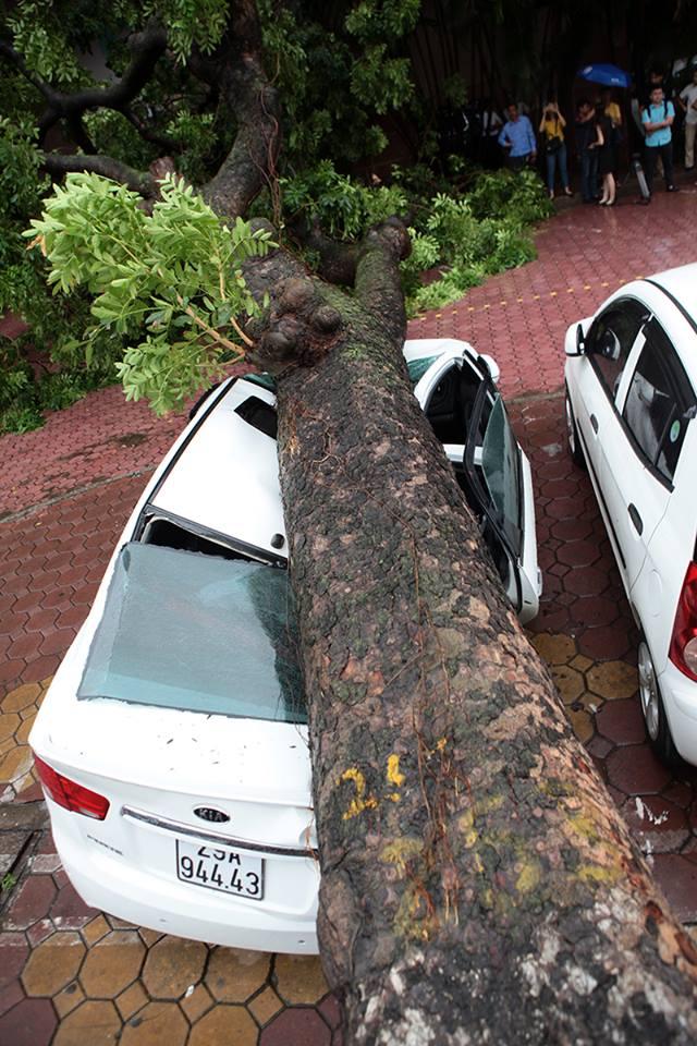 Người dân đừng nhìn cây xá cừ đổ vào xe ô tô trên đường hai bà trưng