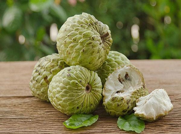 Trái Na: Tin Vui Cho Người Bị Tiểu Đường, Ăn na giúp kiểm soát đường huyết cho người bị tiểu đường, thực phẩm cho người bị tiểu đường, hạ đường huyết,  bệnh tiểu đường, cây xanh, cây bóng mát, trồng cây xanh, cung cấp cây xanh