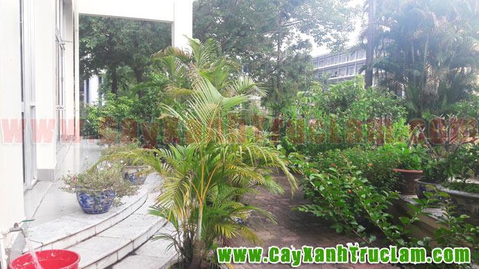 Vườn Cây Xanh phía sau tòa nhà Trung tâm Hợp tác Khoa học Kỹ thuật Việt Đức, Trường Đại học Bách Khoa Hà Nội.