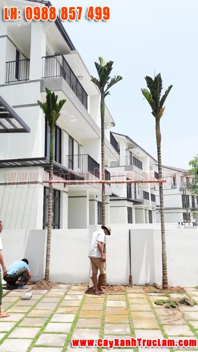 Trồng cây Xanh tại biệt thư nhà vườn Long Cảnh Tây Vinhomes Thăng Long An Khánh