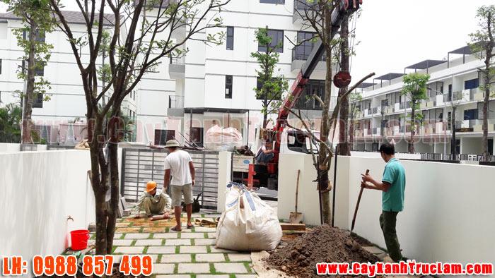 Trồng cây Xanh tại biệt thư nhà vườn Long Hưng Vinhomes Thăng Long An Khánh